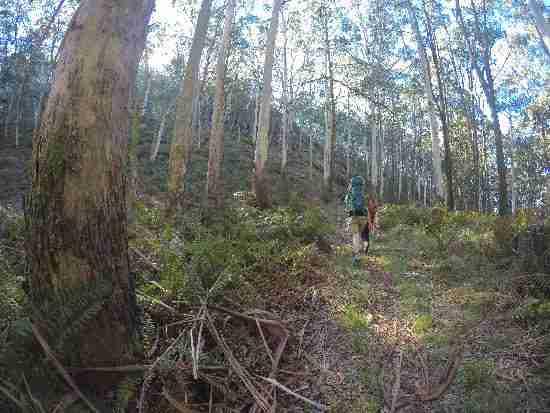 Hiking from Beeripmo to Mugwamp