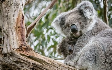 Australian Wildlife Photography Supporting Animals Harmed By Bushfires