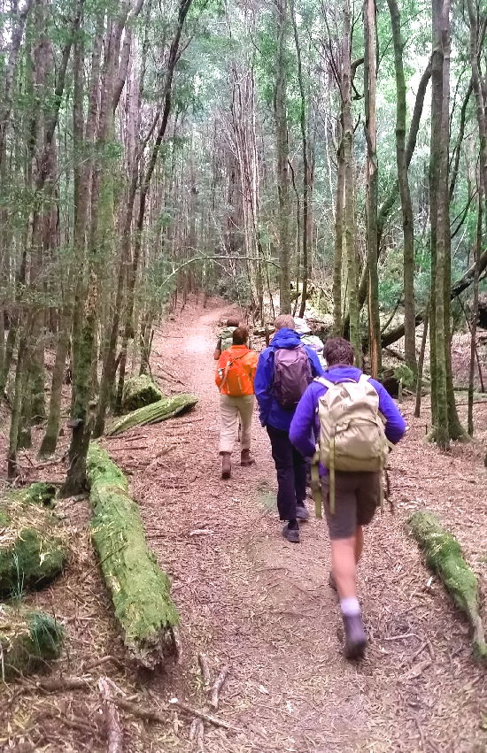 Mt Donaldson group hike through forest