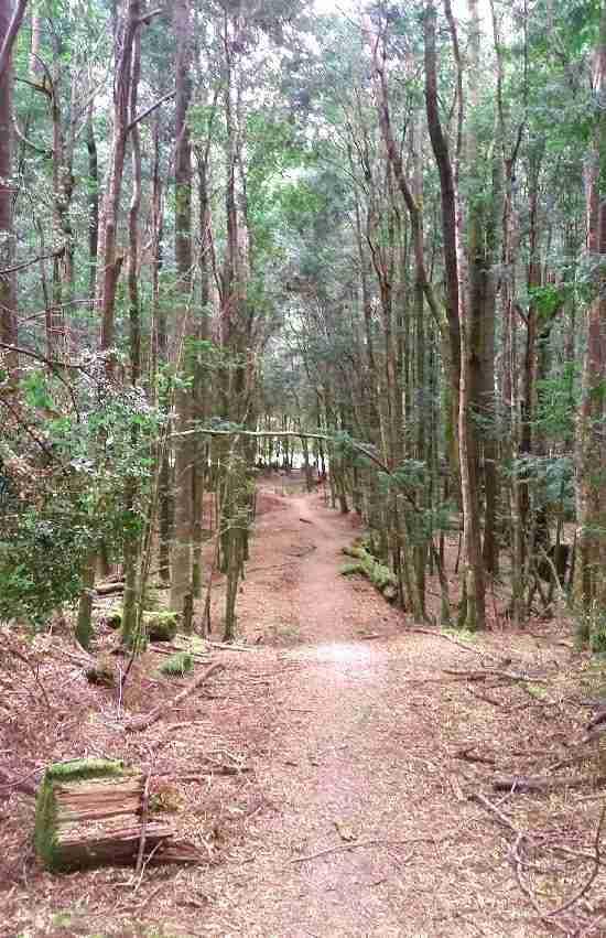 Mt Donaldson walk through forest