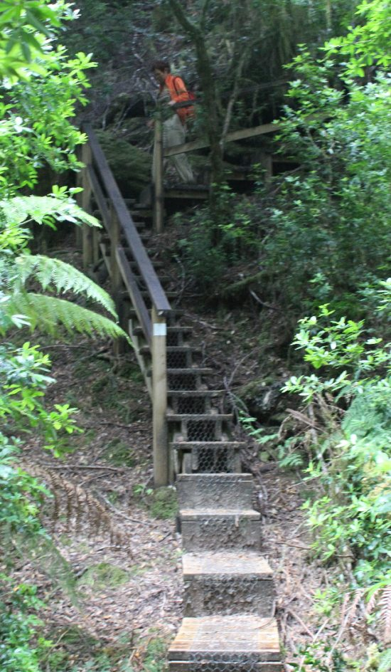 Stairs on the Savage River Walk