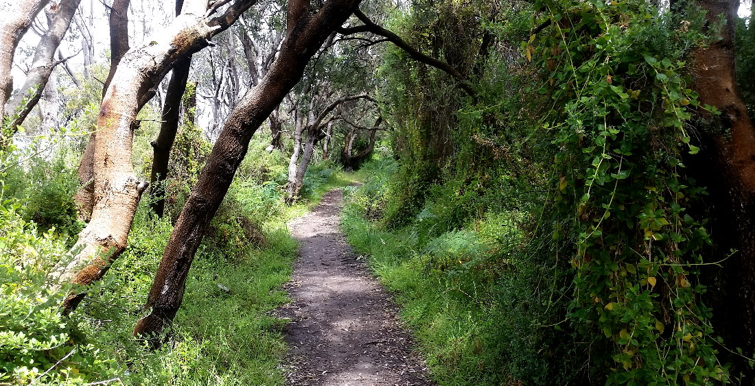 Bush covered trail to Bushrangers Bay