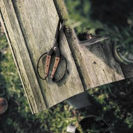 Stainless Steel Scissors On Camping Bench