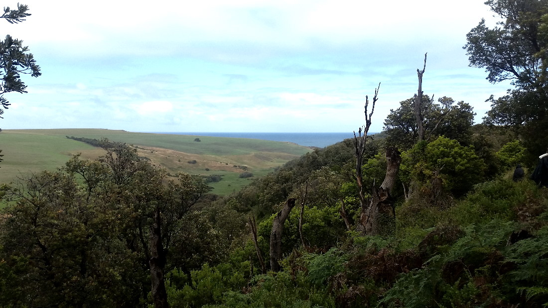 View of fields on Bushrangers Bay Hiking Trail