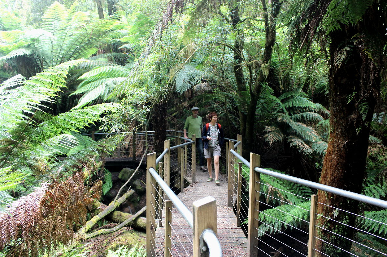 Haalebos walking through Otways Rain Forest in Australia