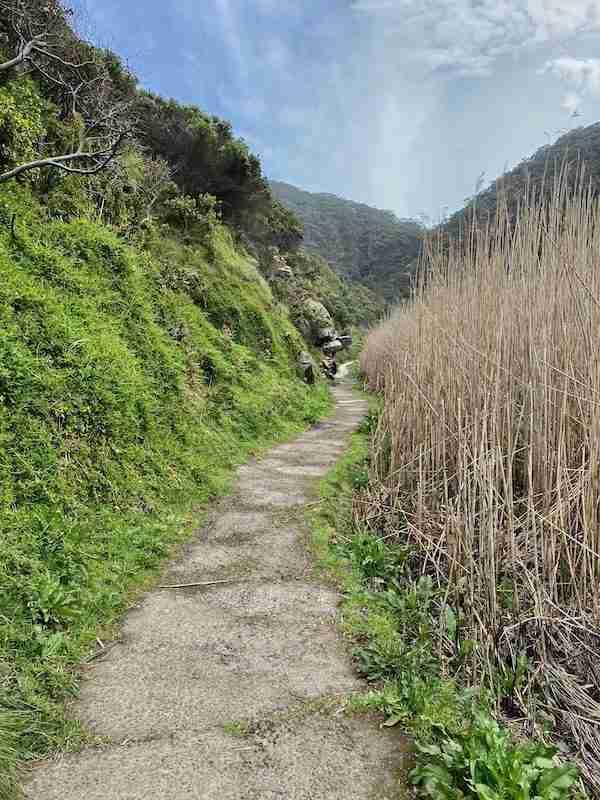 Trail beside Sheoak Creek