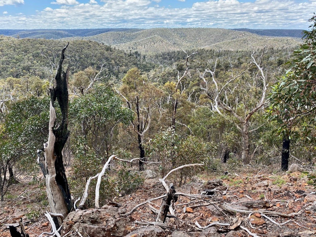 Tree covered hills at the Brisbane Ranges
